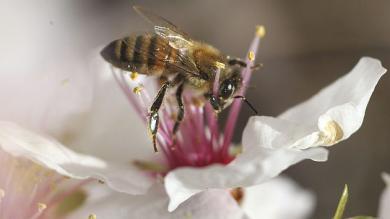 Las abejas tienen un comportamiento parecido a la especie humana. (Reuters)
