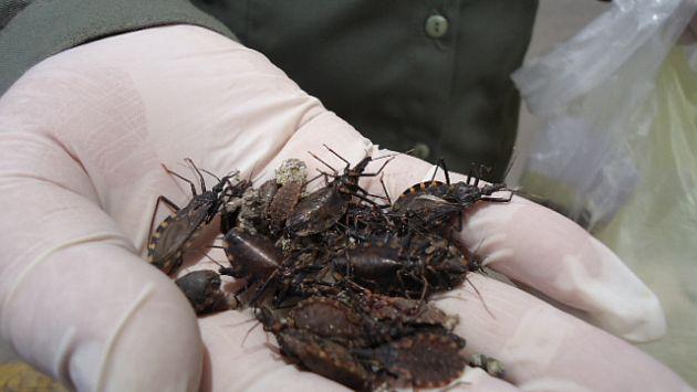 Estos animales causan el mal del Chagas, enfermedad popular en Latinoamérica. (USI)