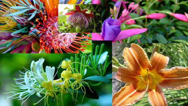 Flores ex ticas negocio pr spero impresa peru21 for Plantas de interior exoticas