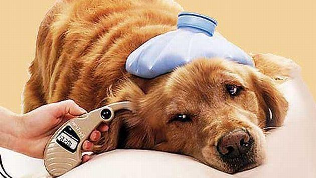 La diabetes también ataca a las mascotas. (Internet)