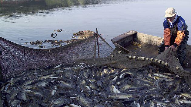 Las actividades pesqueras podrían beneficiarse con el fenómeno de La Niña. (USI)