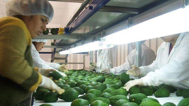 Los productores nacionales se han visto afectados por las restricciones tomadas por Chile. (Difusión)