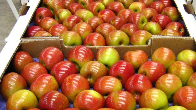 Tema de las manzanas chilenas está muy avanzado, según ministro de Agricultura peruano. (Internet)