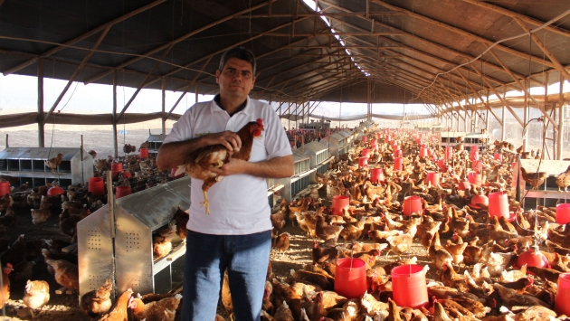 7 mil gallinas en un galpón dan 6,500 huevos diarios. (Difusión)