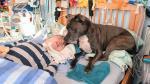 Tascha, el perro que cuida de un niño en estado de coma [Fotos] - Noticias de dylan gerzmehle