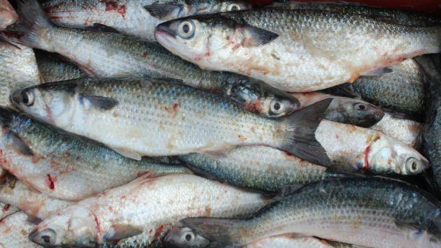 Moradores de Madre de Dios consumen peces contaminados. (USI/Referencial)