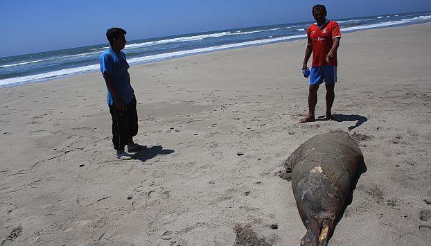 Piura: Pescadores mataron con veneno a delfines y lobos marinos. (USI/Referencial)