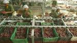 Mincetur dice que agroexportaciones serán las más dinámicas - Noticias de carlos bruce