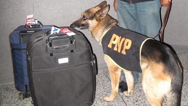 Policías colocaban la droga en maletas poco antes de que burriers se embarcaran. (USI)
