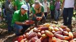 Ucayali: Devida promueve los cultivos alternativos en el Alto Huallaga - Noticias de pozuzo