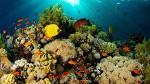 Arrecifes de coral del Caribe podrían desaparecer en 20 años - Noticias de caribe
