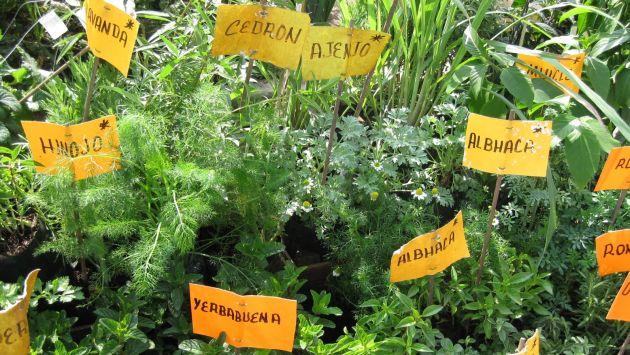 Plantas medicinales impresa peru21 for Tipos de hierbas medicinales