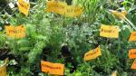 Cure a sus clientes con plantas medicinales - Noticias de 2008