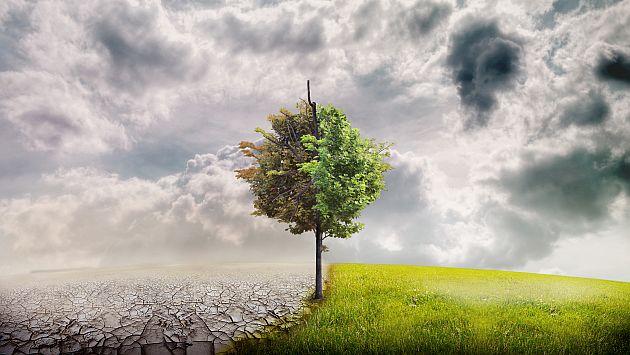 Impacto global. Plantas de Norteamérica buscan lluvias. (USI)