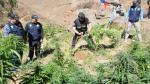 La droga fue descubierta el viernes 8 de agosto. (Perú21)