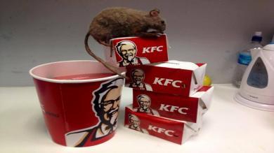 Memes de la rata encontrada en KFC de Plaza San Miguel