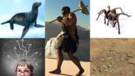 Investigadores creen que las focas y lobos marinos trajeron la tuberculosis a América. (USI)