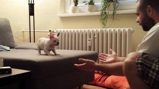 YouTube: Tierno cachorro aprende a saltar a los brazos de su amo