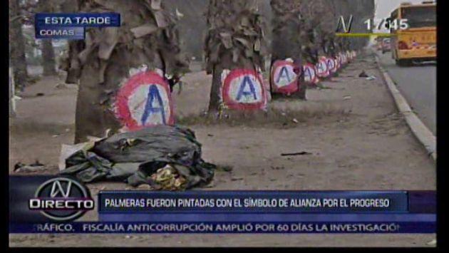 Comas: Pintan palmeras con publicidad de Alianza para el Progreso