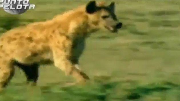 Real Madrid: TV3 fue multada por comparar a jugadores merengues con hienas