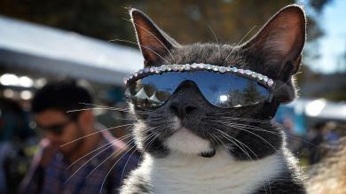 Estados Unidos, Videos, Los Ángeles, Fotos, Gatos, Festival de Cine, Felino