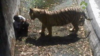 Muerte, India, Video, Adolescente, Zoológico, Tigre blanco