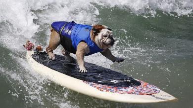 EEUU: Mascotas conquistaron las olas en el Surf City Dog [Fotos]