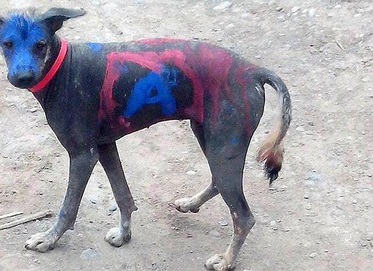 Perro peruano fue pintado con logo de Alianza para el Progreso