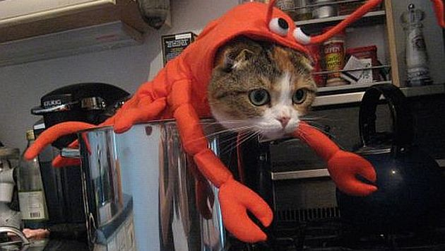 15 opciones para disfrazar a tu gato en Halloween
