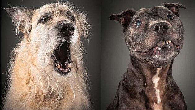 'Old Faithful': Cuando los perros envejecen [Fotos]