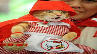 Gatos, Disfraces, Halloween