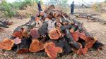PCM garantizó protección a comunidades nativas ante la tala ilegal