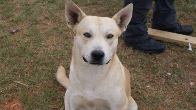 EEUU: Perro ayudó a la Policía a capturar a su amo