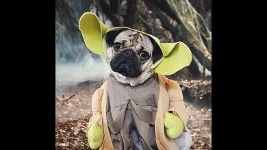 Halloween, Doug the Pug