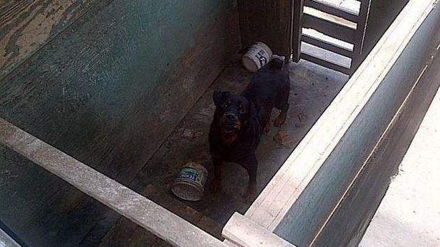 Carmen de la Legua: Brigada canina del serenazgo está en total abandono. (RPP/@Hei14 / Twitter)