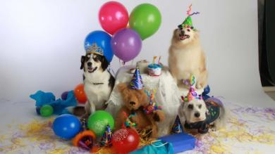 Fiestas para mascotas