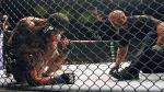 UFC: Edgar humilló a Swanson y se acerca al título de peso pluma [Video y fotos] - Noticias de dennis hope