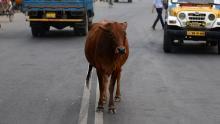 Venezuela, Accidente de tránsito, Transporte público, Vaca
