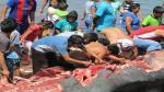 Piura: Pescadores despedazaron a ballena que varó en el puerto de Paita - Noticias de paita