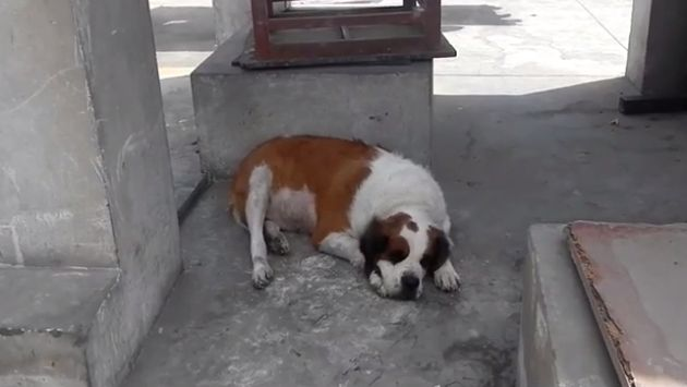 Canes iban a ser sacdos del país. (YouTube)