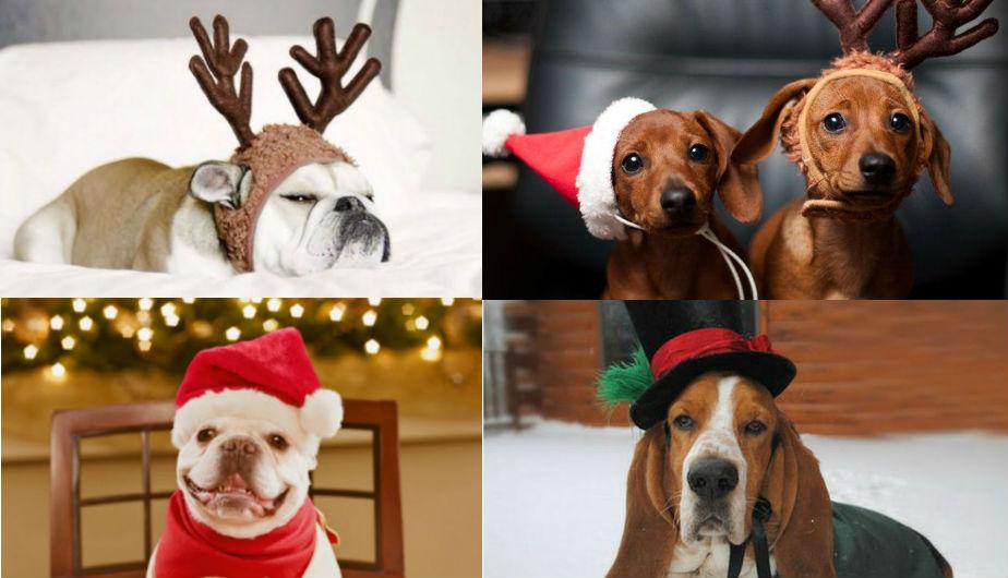 Pinterest 13 Disfraces Para Perros Inspirados En