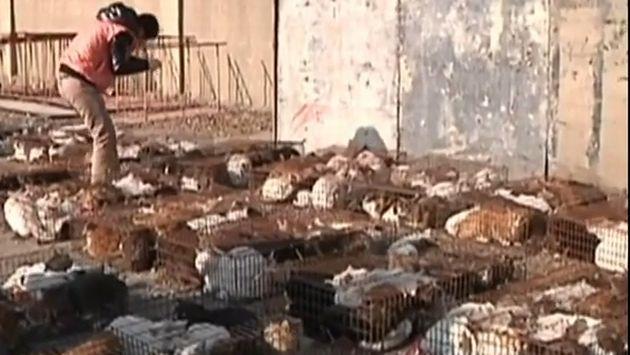 Gatos estaban en distribuidos en varias jaulas. (Captura RT)