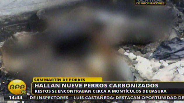 Nueve perros fueron hallados carbonizados en San Martín de Porres. (RPPTV)