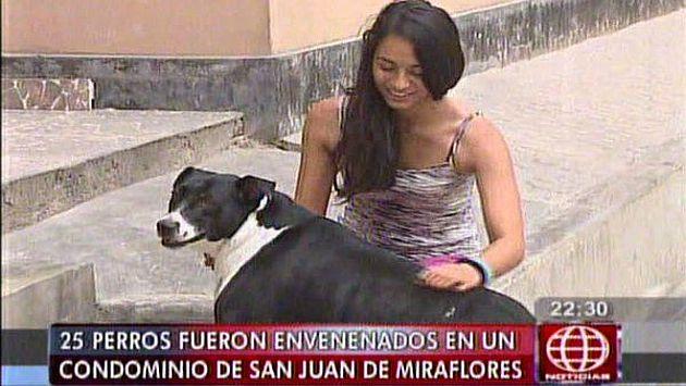 Unos 25 perros fueron envenenados en un condominio de San Juan de Miraflores. (Canal 4)