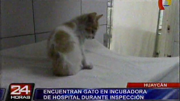 Gato fue hallado durmiendo en una incubadora del hospital de Huaycán. (Captura de TV)