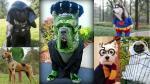 Pinterest: 13 disfraces para perros inspirados en personajes del cine