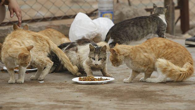 Cerca de 3,000 gatos fueron rescatados, aunque su destino final es incierto. (Referencial/Trome)
