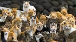 Conoce Aoshima, la isla que tiene más gatos que habitantes [Fotos y video]