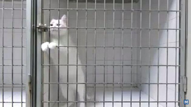 Cibernautas saludaron la habilidad del gato para abrir su jaula. (YouTube)