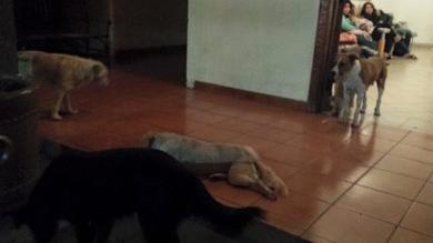 México, Perros